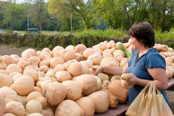 Bradley Farm squash