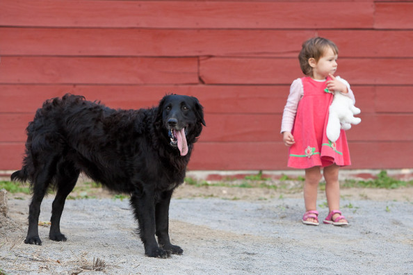 Ray Bradley's dog, Gracie, found a great play companion