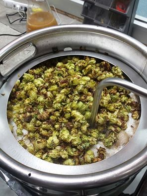 brewing hops