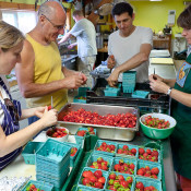 Preparing strawberries for shortcake